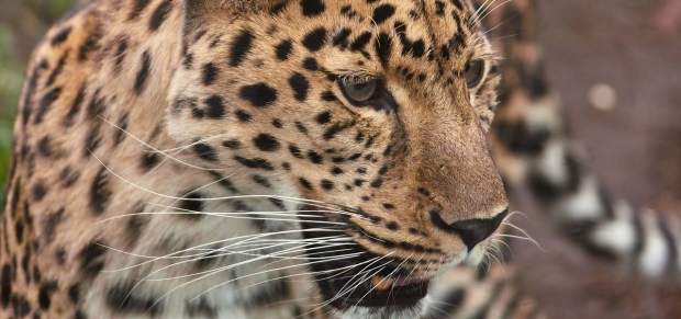 Feed The Leopards Day