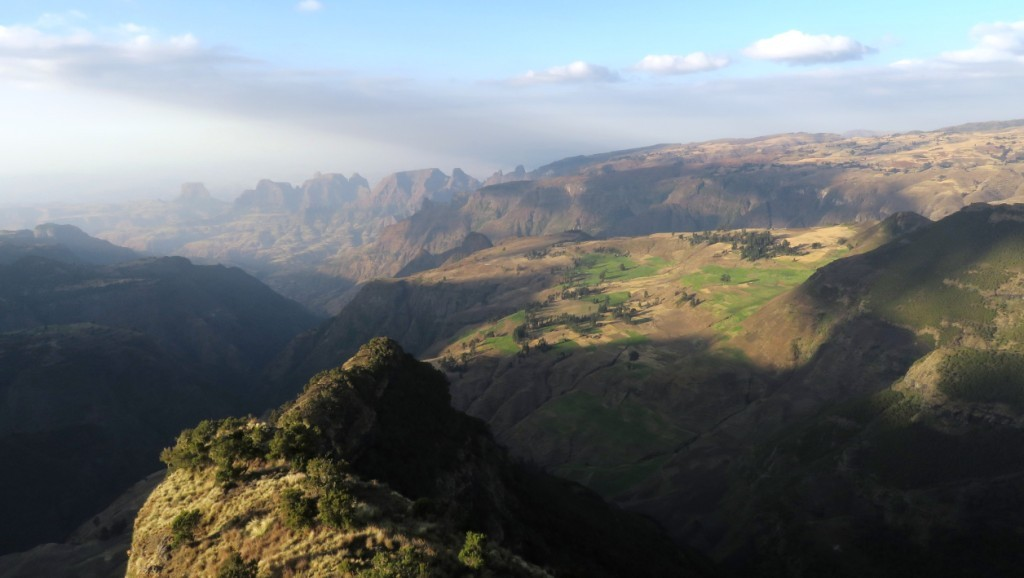 Simien sundowner